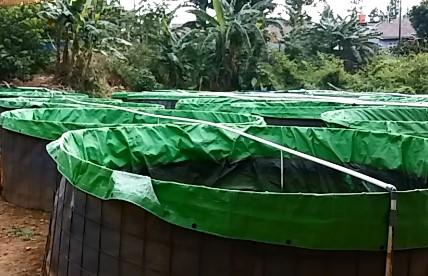 Cara membuat kolam terpal bundar lele dengan mudah SUKSES TERNAK LELE